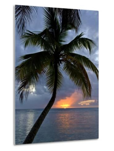 Palm Tree in Front of a Beautiful Sunset over the Water-Michael Melford-Metal Print