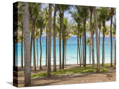 Rows of Palm Trees Line a Tropical Beach in Cancun, Mexico-Mike Theiss-Stretched Canvas Print