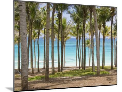 Rows of Palm Trees Line a Tropical Beach in Cancun, Mexico-Mike Theiss-Mounted Photographic Print