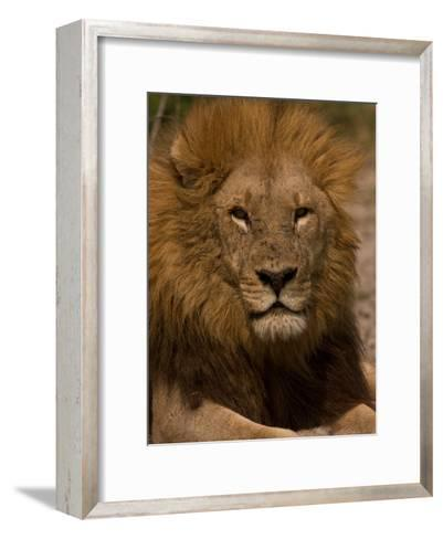 Portrait of a Resting Male African Lion, Panthera Leo-Beverly Joubert-Framed Art Print