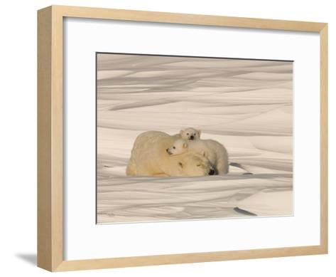 Polar Bear Sleeping with Her Cubs in a Snowy Landscape-Norbert Rosing-Framed Art Print