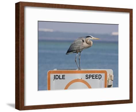 Great Blue Heron Standing on a Boating Sign-Marc Moritsch-Framed Art Print
