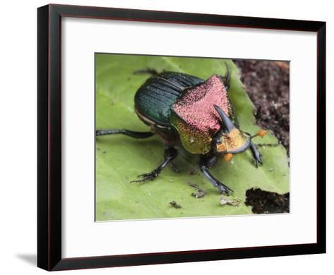 Metallic Colored Male Dung Beetle with Horn on its Head-George Grall-Framed Art Print