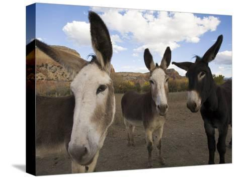 Donkeys Peer at the Camera in a Desert Scene-Ralph Lee Hopkins-Stretched Canvas Print