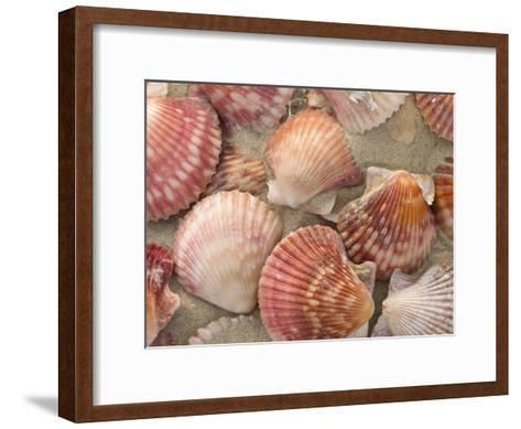 Scallop Shells on a Beach-Ralph Lee Hopkins-Framed Art Print