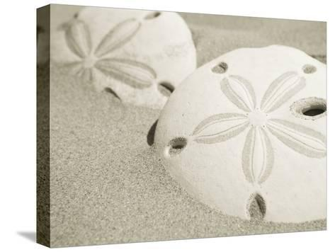 Two Sand Dollars Rest in the Sand of the Beach-Ralph Lee Hopkins-Stretched Canvas Print