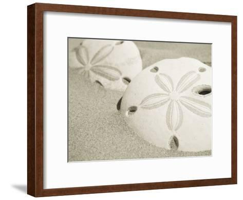 Two Sand Dollars Rest in the Sand of the Beach-Ralph Lee Hopkins-Framed Art Print
