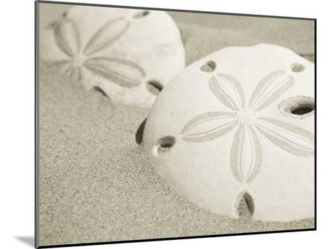 Two Sand Dollars Rest in the Sand of the Beach-Ralph Lee Hopkins-Mounted Photographic Print