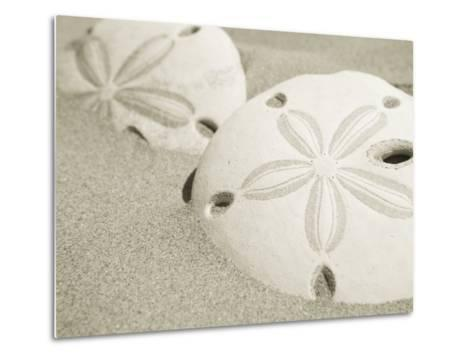 Two Sand Dollars Rest in the Sand of the Beach-Ralph Lee Hopkins-Metal Print