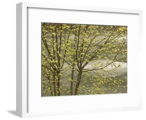 Trees Growing Along the Banks of the Merced River in Late Spring-Phil Schermeister-Framed Art Print