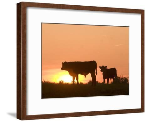Two Cows Standing Silhouetted Against an Orange Sunset-Phil Schermeister-Framed Art Print