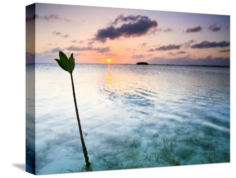 Sunset on the Flats of Acklins Island, Bahamas-Drew Rush-Stretched Canvas Print
