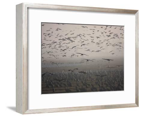 Sandhill Cranes Flying and Resting in Morning Fog-Marc Moritsch-Framed Art Print