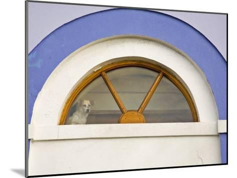 Dog Stands in a Window Above a Door Frame-Michael Melford-Mounted Photographic Print
