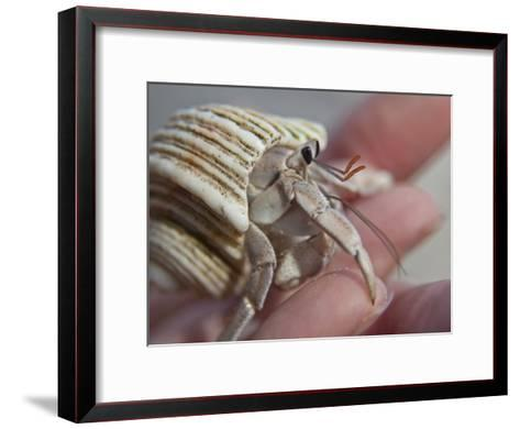 Hand Holding a Hermit Crab-Michael Melford-Framed Art Print