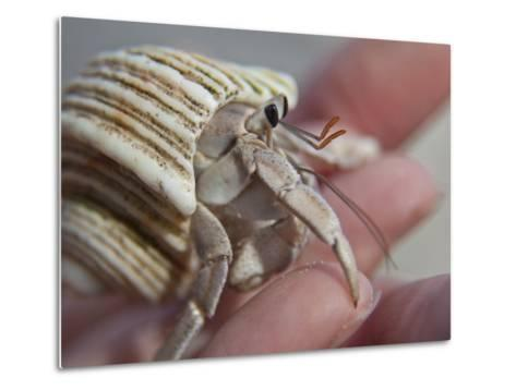 Hand Holding a Hermit Crab-Michael Melford-Metal Print