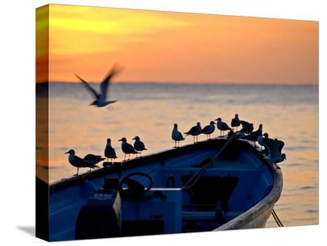Birds Standing on the Bow of a Wooden Boat at Sunset-Michael Melford-Stretched Canvas Print
