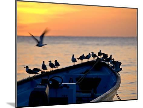 Birds Standing on the Bow of a Wooden Boat at Sunset-Michael Melford-Mounted Photographic Print