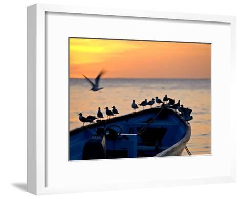 Birds Standing on the Bow of a Wooden Boat at Sunset-Michael Melford-Framed Art Print