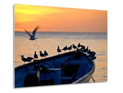 Birds Standing on the Bow of a Wooden Boat at Sunset-Michael Melford-Metal Print
