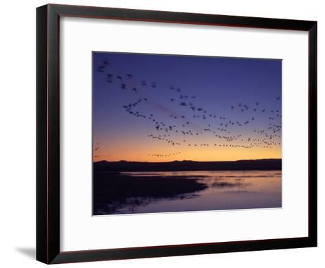Snow Geese Flying Along the Rio Grande at Sunrise-Ralph Lee Hopkins-Framed Art Print