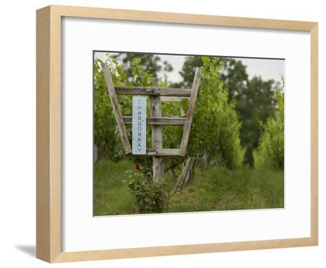 Chardonnay Grapes at a Vineyard in Virginia-Greg Dale-Framed Art Print