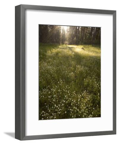 Ackerson Meadow Area at Daybreak-Phil Schermeister-Framed Art Print