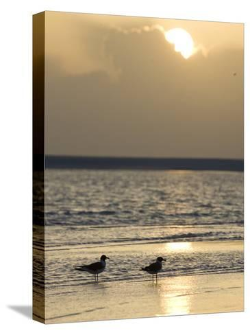 Two Birds on a Sandy Beach at Sunset-Roy Toft-Stretched Canvas Print