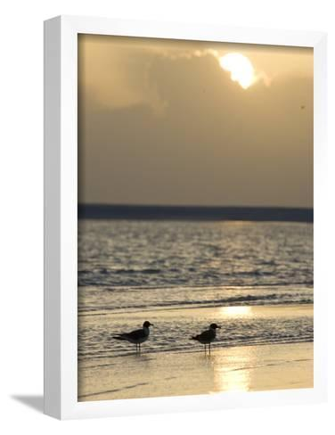 Two Birds on a Sandy Beach at Sunset-Roy Toft-Framed Art Print