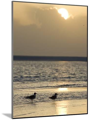 Two Birds on a Sandy Beach at Sunset-Roy Toft-Mounted Photographic Print