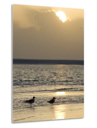 Two Birds on a Sandy Beach at Sunset-Roy Toft-Metal Print