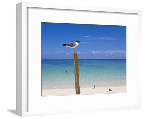 Man Swimming and Gulls Basking on a Clear Bahamas Day at the Beach-Mike Theiss-Framed Art Print