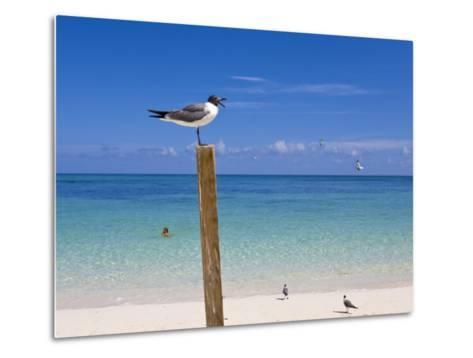 Man Swimming and Gulls Basking on a Clear Bahamas Day at the Beach-Mike Theiss-Metal Print