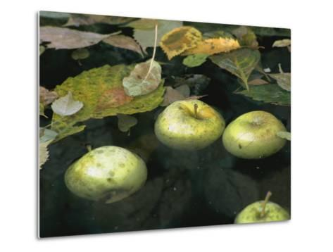 Four Green Apples Floating in a Pond in the English Walled Garden-Paul Damien-Metal Print
