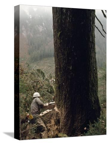 Logger with a Chainsaw Takes Down a Massive Old Tree-Chris Johns-Stretched Canvas Print