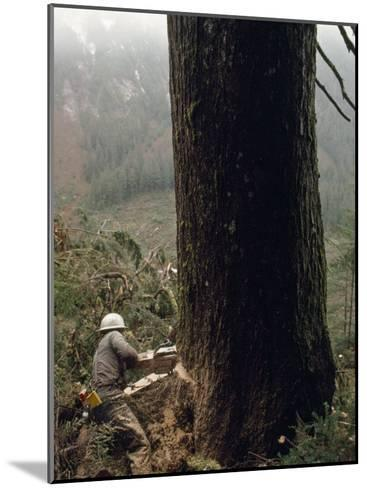 Logger with a Chainsaw Takes Down a Massive Old Tree-Chris Johns-Mounted Photographic Print