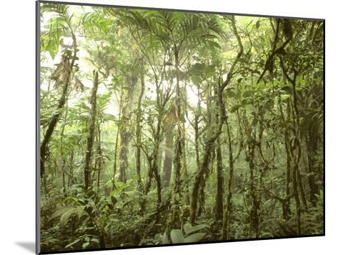 Trees and Vines in the Mist of the Monteverde Rainforest-Skip Brown-Mounted Photographic Print