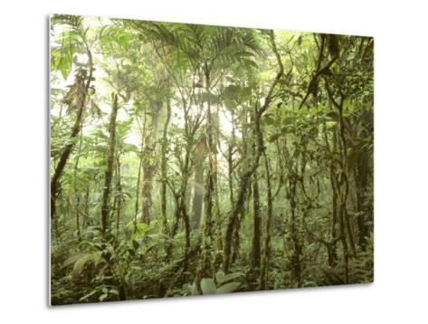 Trees and Vines in the Mist of the Monteverde Rainforest-Skip Brown-Metal Print