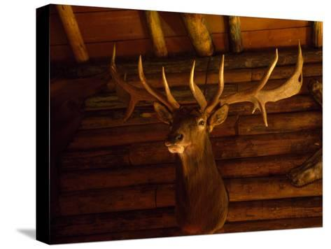 Mule Deer Head and Antlers Hanging Inside a Hunting Cabin-Joel Sartore-Stretched Canvas Print