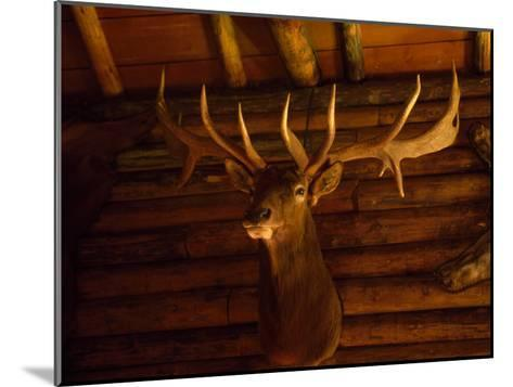 Mule Deer Head and Antlers Hanging Inside a Hunting Cabin-Joel Sartore-Mounted Photographic Print