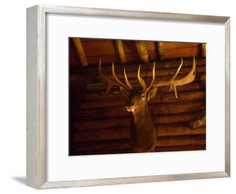 Mule Deer Head and Antlers Hanging Inside a Hunting Cabin-Joel Sartore-Framed Art Print