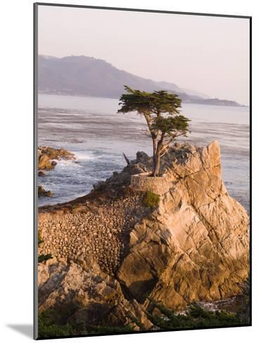 Cypress Tree Along the 17-Mile Drive Outside of Carmel in Monterey County-Richard Nowitz-Mounted Photographic Print