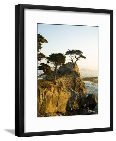 Cypress Tree Along the 17-Mile Drive Outside of Carmel in Monterey County-Richard Nowitz-Framed Art Print