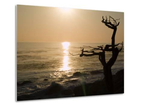 Cypress Tree Along the 17-Mile Drive Outside of Carmel in Monterey County-Richard Nowitz-Metal Print