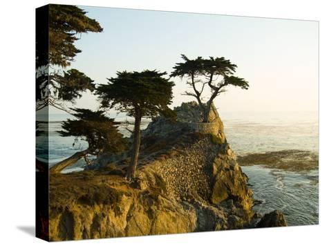 Cypress Tree Along the 17-Mile Drive Outside of Carmel in Monterey County-Richard Nowitz-Stretched Canvas Print