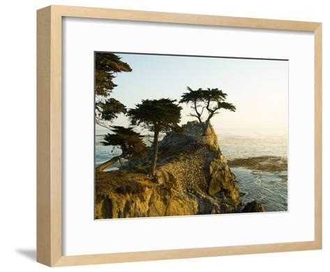 Cypress Tree Along the 17-Mile Drive Outside of Carmel in Monterey County-Richard Nowitz-Framed Art Print