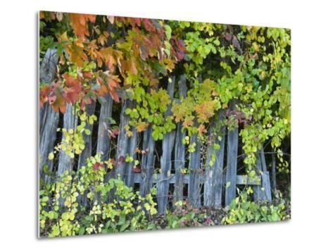 Fall Foliage around an Old Wooden Fence-Todd Gipstein-Metal Print