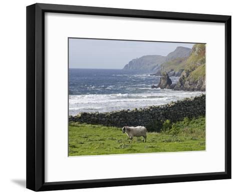 Rock Wall and a Scottish Blackface Sheep Along the Coast-Rich Reid-Framed Art Print