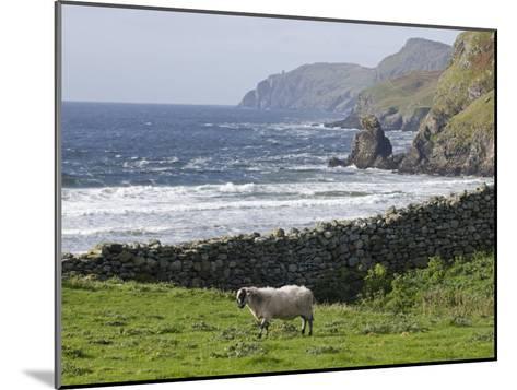 Rock Wall and a Scottish Blackface Sheep Along the Coast-Rich Reid-Mounted Photographic Print