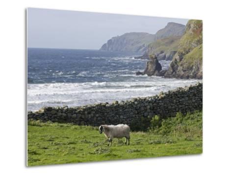 Rock Wall and a Scottish Blackface Sheep Along the Coast-Rich Reid-Metal Print